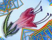 plantaelover