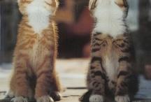 "Minou (Cajun French for ""kitty"")"
