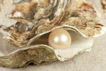Shimmery Shells