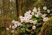Flower refs