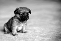AAWWEESS...just too cute / by Elaine Moore