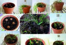 bombas de semillas / seedballs o bombas de semillas
