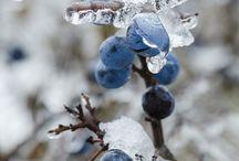 Frozen things