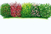 Garden / Add
