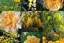 Couleur : Jaune / Décoration,  objets, jardin : jaune