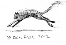My art work / pen and ink drawings. most are small. hope they bring a smile. / by Don Poole