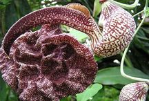 Rare and strange plants