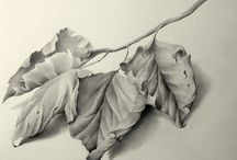 Frunza leaf