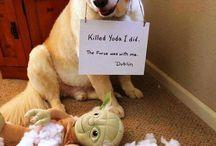 Dog Shaming / We love them anyway.