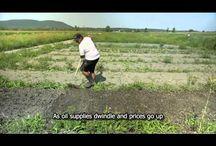 Small-scale farming