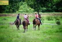 Tours in Osa Costa Rica / Available #tours and activities in the Osa Region of #costarica including #waterfalls #horseback riding #ziplines #nauyaca