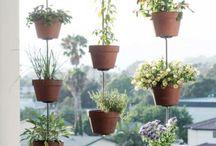 Växter - utomhus