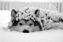 Fur-ociously Cute