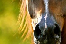 animales / todo los caballos que me encantan