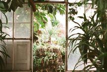 植物 / 緑がいっぱい