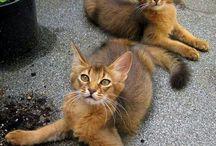 szép színű cicák