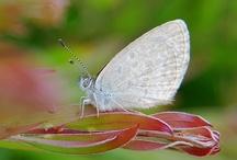 Butterflies / by Melba Herrera