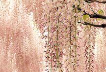 Mood board floral