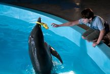 Dolphin Tale 1 & 2 / by Clearwater Marine Aquarium
