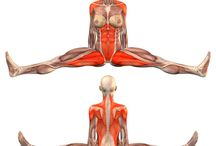 yoga with anatomia