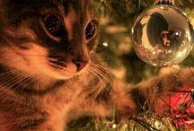 Fundal Crăciun