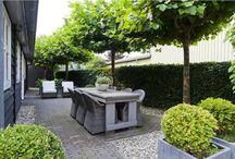 &garden