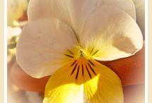Blumen / Meine Blumenfotos (c) M.Z.  Bitte nicht kopieren!