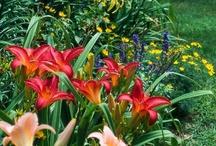 The Garden / by Jennifer Hennings Hudson