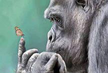 Photo gorilla / ...так похожи на людей