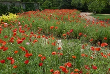 All about Poppy