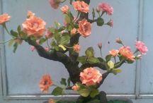 mponsai / bonsai