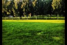 Milano a giugno (2013) / Una serie di immagini