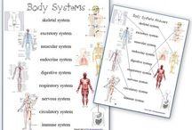 Reggio: Project: The Human Body