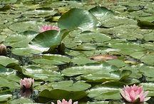 Monet's Garden ss