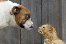 Animal Science / Fascinating Animal Science Stories
