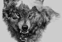 Wolfs and owls