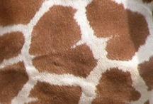 Gotta luv giraffe's