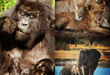 Africa's wildlife / The fierce but remarkable animals and nature of Africa.
