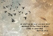 Quotes and stuff / by Diana Cox