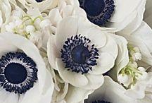 Navy & White Wedding