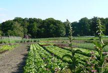 Biologische boerderijen / Boerderijen met biologisch producten