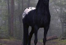 Equitazione / Cavalli amazzoni