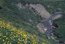 Damp meadow
