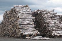 Birch-logs / by Allison Worrell