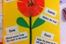 Plants / by Joy Eutsler