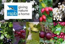 Garden Wildlife / Garden for wildlife. Looking out for the birds,bees, butterflies!
