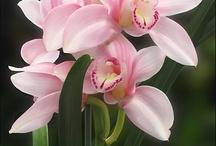 la bellezza di fiore