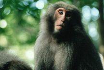 Monkeys & The Monkey King / i am a monkey - 'nuf said