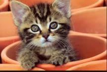 micio miao
