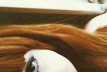 Daniela Herdy de Moraes - me